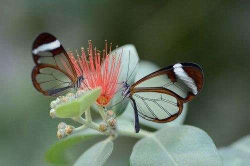 19 Волшебных превращений гусениц в бабочек и мотыльков (38 фото)