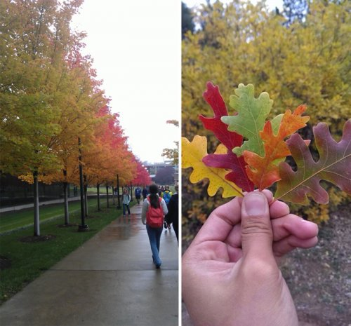 Осенняя палитра в фотографиях (15 шт)