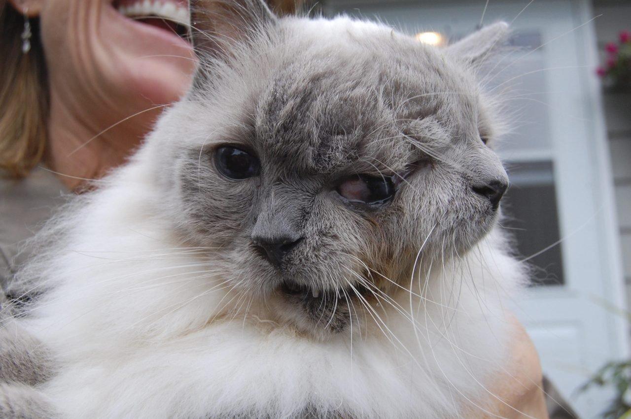 Трёхглавый кот