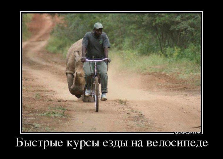 Демотиватор еду на велосипеде