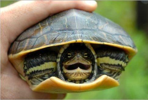 Когда в сновидении черепахи большие и маленькие оказались у спящего в доме, это призыв определиться с собственными приоритетами.