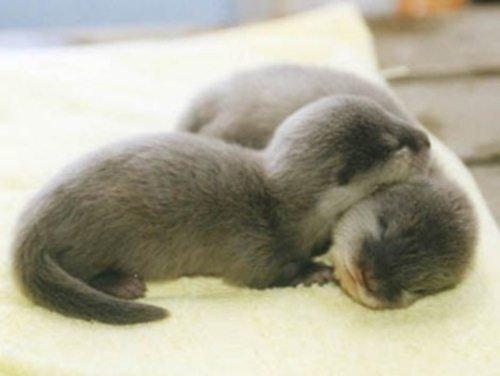 Очаровательные малыши из мира животных (16 фото)