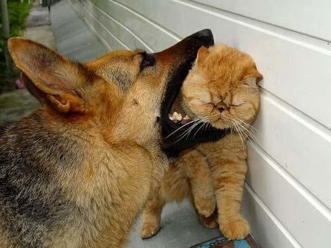 Стая собак напала на котенка!
