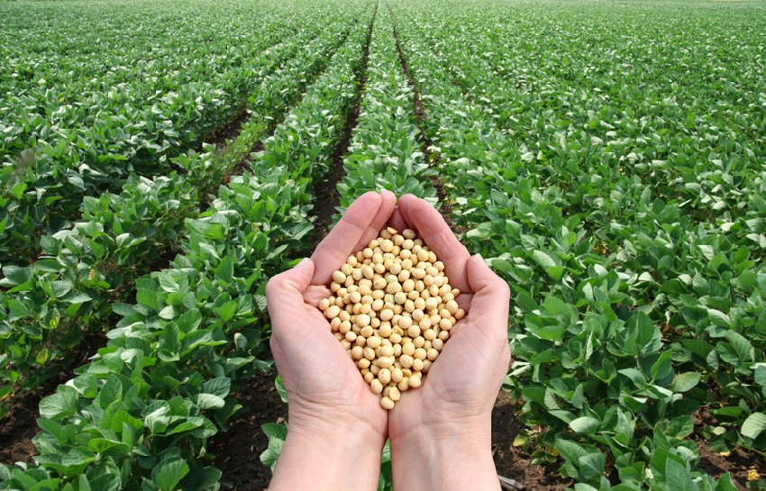 agribusiness genetically modified crops Agriculture is complicated farmers have to make hundreds of decisions every day about what to do on their farms based on a constantly changing set of vari.