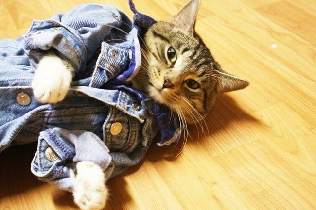 Cat Wearing Panties!!!  YouTube