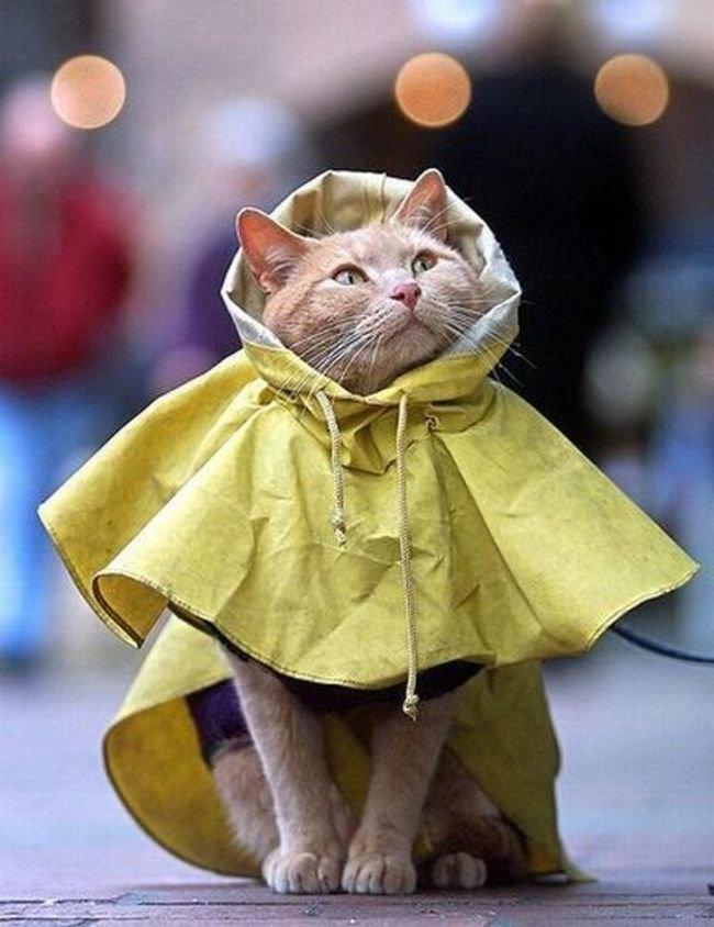 идея стиля фото кошка в пальто гены знатного рода