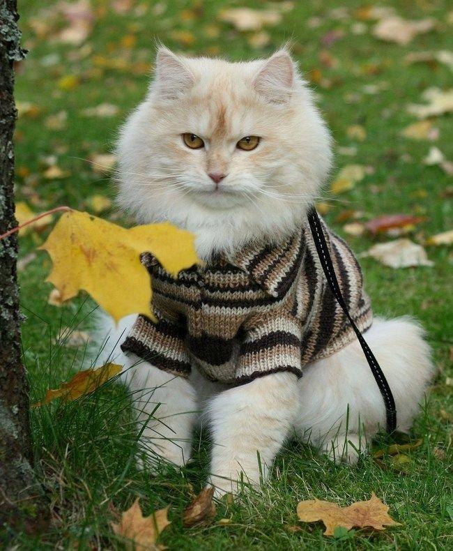 фото кошка в пальто может