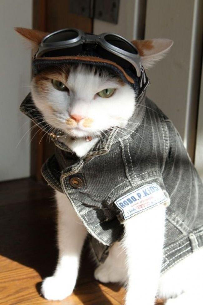 Прикольные картинки кошка в одежде
