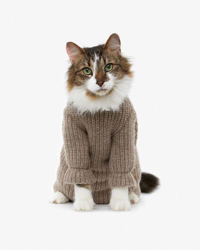 картинки кошек на одежде варианты могут содержать