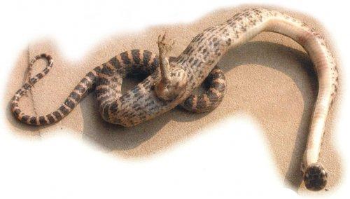 Топ-15 странных животных с генетическими мутациями