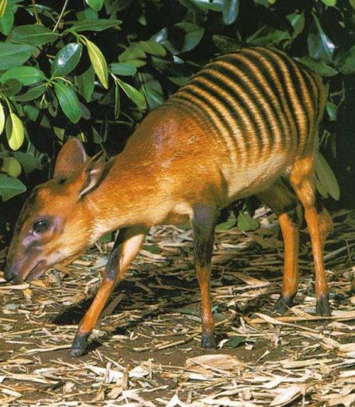 Топ-25 прикольных животных, в существование которых сложно поверить