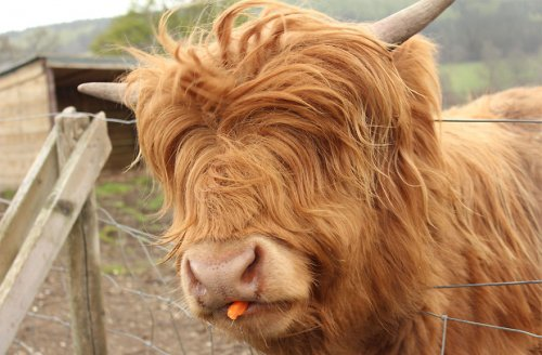 Животные с великолепной шерстью (24 фото)