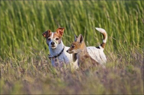 Неожиданная дружба в мире животных (10 фото)