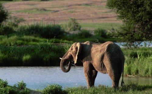 Топ-12 умнейших животных нашей планеты