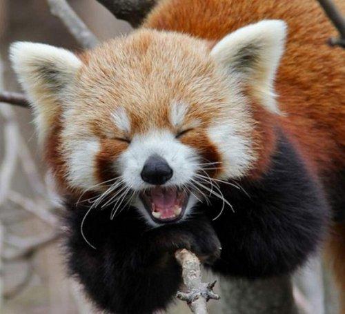 Животные, которые заразят вас своим смехом (33 фото)