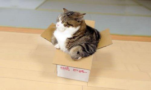 Самые известные коты в Интернете (65 фото)