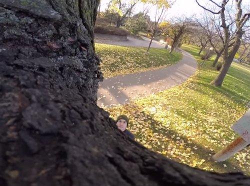 Видео, снятое белочкой на камеру GoPro