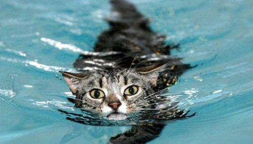 Плавающие кошки (14 фото)