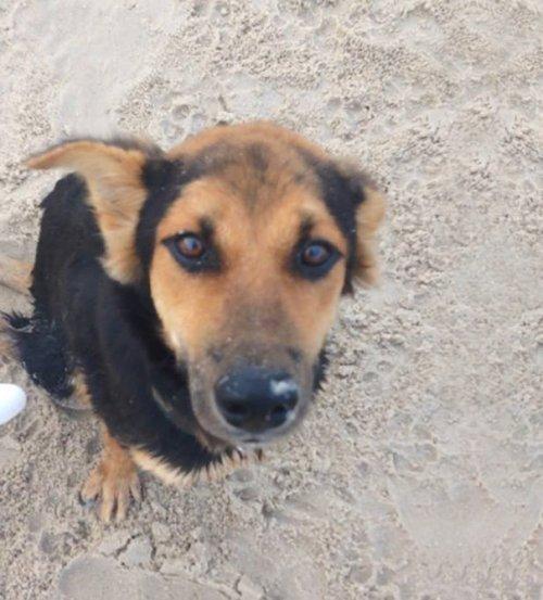 Трогательная история о Лео – щенке с парализованными задними лапами (16 фото)