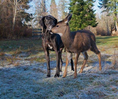 Неожиданная и трогательная дружба между животными (36 фото)