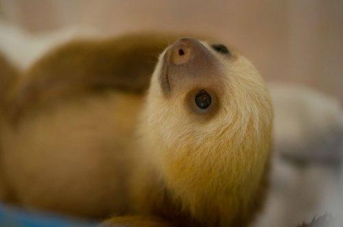 Топ-15: Странные животные с удивительно милыми детёнышами