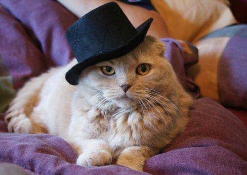 Коты и кошки в одежде (28 фото)