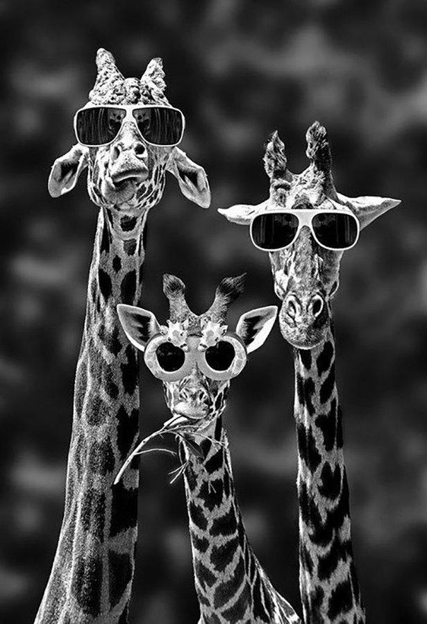 Прикольные картинки на аву жирафа