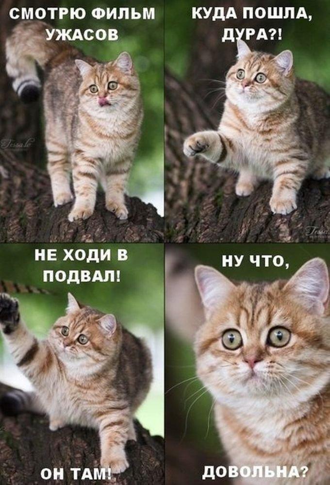 http://www.bugaga.ru/uploads/posts/2014-12/1418742731_fotomemy-16.jpg