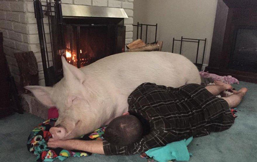 приветствует парень свинья картинки словам