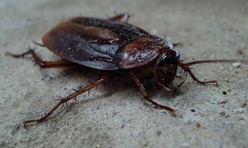 Топ-10: Организмы, способные выживать в экстремальных условиях
