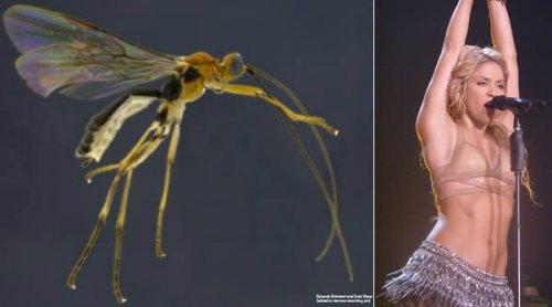 Новые виды, названные в честь поп-икон (10 фото)