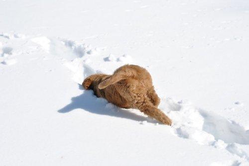 Собаки и кошки впервые играют в снегу (33 фото)