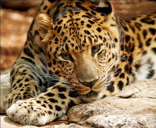 Топ-25: Исчезающие виды животных, которые следующее поколение может не застать