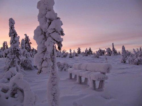 Зима в Национальном парке Рииситунтури (8 фото)