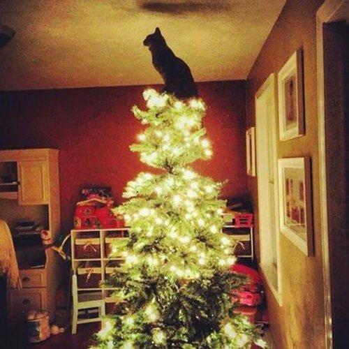 Кошки на новогодних ёлках (24 фото)