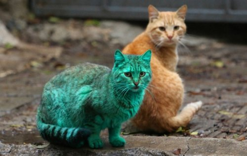 Тайна зелёного кота из Варны (10 фото + видео)