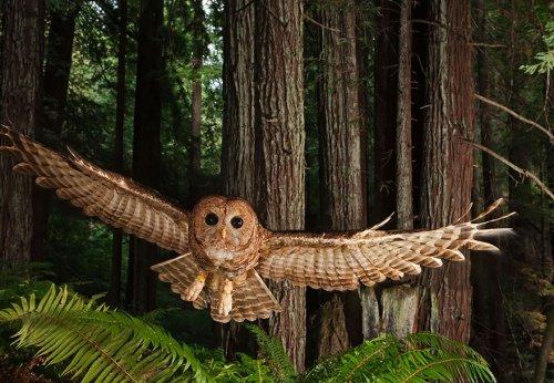 Величественные и загадочные совы (33 фото)