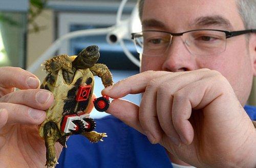 Инвалидная коляска для черепахи из конструктора LEGO (6 фото)