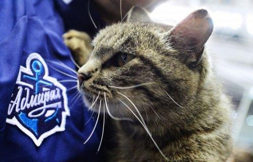 Невероятный карьерный взлёт бездомной кошки: из витрины магазина — в талисманы хоккейного клуба (7 фото)