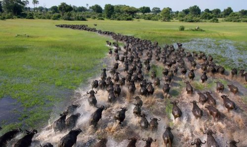 Впечатляющие фотографии большого скопления диких животных (25 фото)