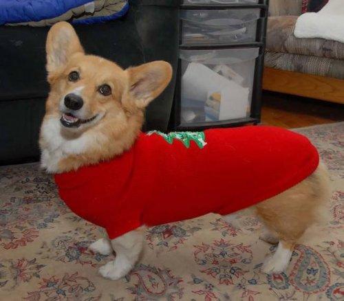 Праздничные собаки в новогодних свитерах (18 фото)
