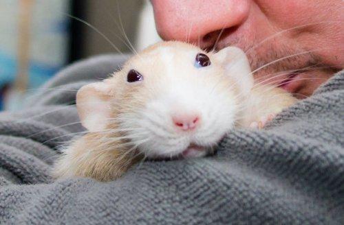 Нескучная жизнь забавного мышонка Мартина (28 фото)