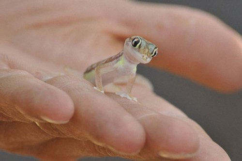Рептилии, которые вас очаруют (37 фото)