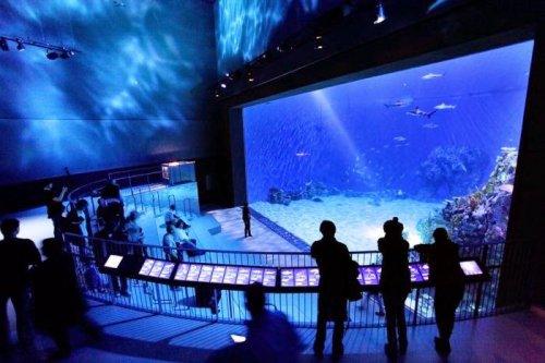 """Потрясающий океанариум """"The Blue Planet"""" в Дании (18 фото)"""
