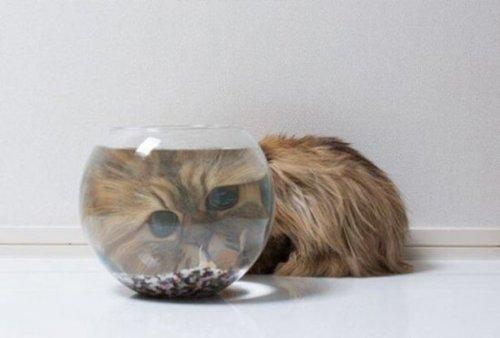 Приколы с кошками (25 фото)