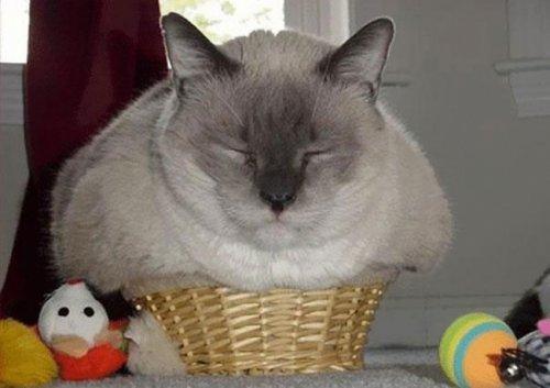 Кошки, которые умеют помещаться во всё (19 фото)
