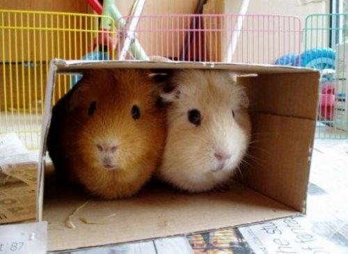 Животные парами в коробках (10 фото)