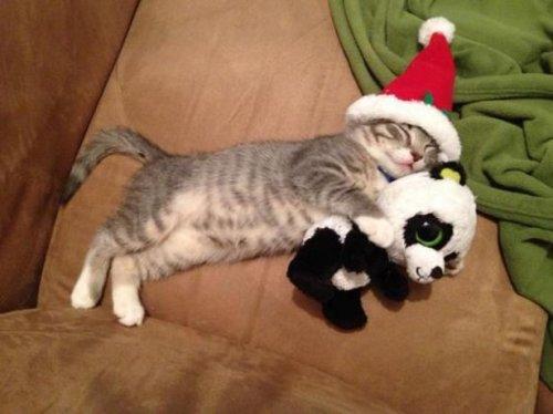 Рождество в мире животных (22 фото)