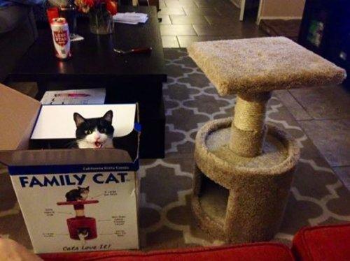 Прикольные картинки с кошками (27 шт)