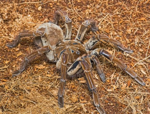 Топ-15: Самые опасные пауки в мире